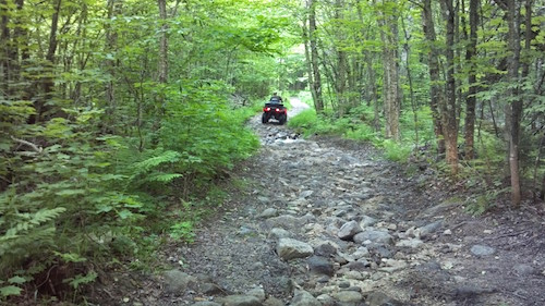 fourwheeling_with_trees